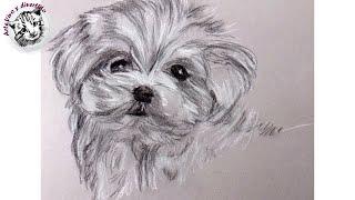 Como Dibujar un Perrito con Carboncillo y Lapiz Carbon Blanco y Negro | Dibujo Artistico: un cachorr