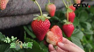 《谁知盘中餐》 20200310 草莓需要安心吃|CCTV农业