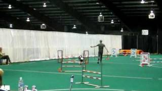 May 9, 2009 Lancelot Agility Akc Open Jumpers With Weaves