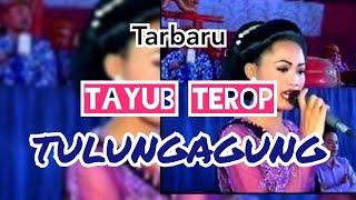 TAYUB TULUNGAGUNG TEROB TERBARU GENDUT 3