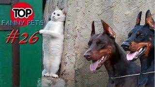 Лучшие приколы апрель 2019 ТОП СМЕШНЫХ ВИДЕО С КОТАМИ Смешные животные Смешные кошки TOP FUNNY PETS