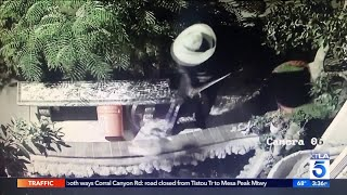 Video Captures Koi Fish Theft in Westminster