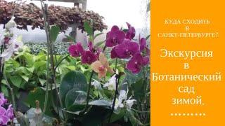 Смотреть видео Куда сходить в Санкт-Петербурге? Экскурсия в Ботанический сад зимой. онлайн