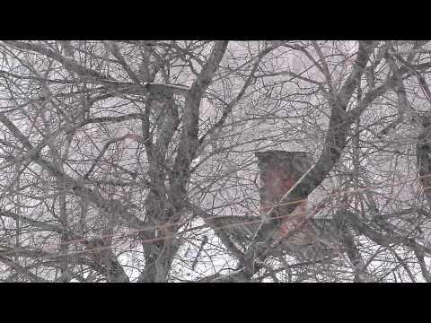 Снегопад | Snowfall | 2012