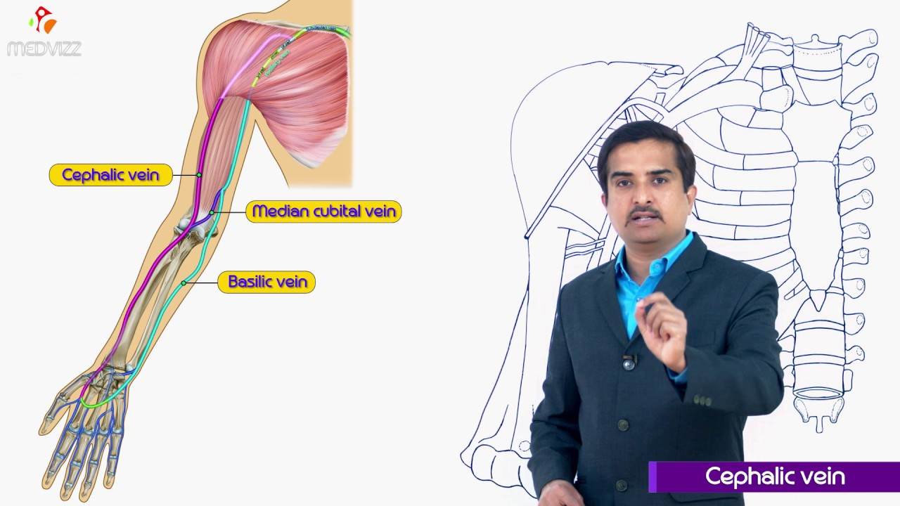 Cephalic Vein Gross Anatomy Of Upperlimb Medical Animation Dr G