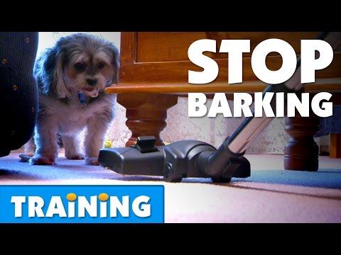 how-to-stop-your-dog-from-barking-|-bondi-vet