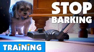 How To Stop Your Dog From Barking | Bondi Vet