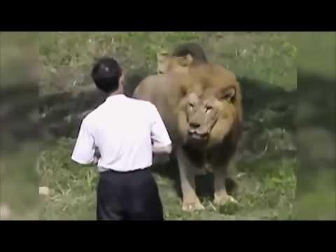 Самые Жестокие Нападения Животных на Человека в Зоопарках