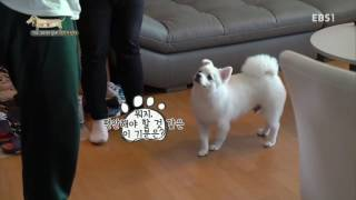 세상에 나쁜 개는 없다 - 가수 크러쉬 집에 악귀가 산다_#002