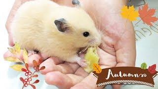 秋の味覚サツマイモ(^^) ホクホク甘くて栄養たっぷりです。 よっぽど気に入ったのか、無茶な事するので焦りました   自分の小屋に行けば吐き...