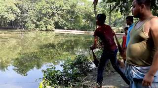 Net cast fishing || Catching fish by cast net