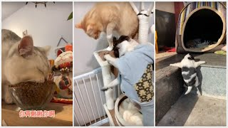 😁 Funniest 🐶 Dogs and 😻 Cats - Awesome Funny Pet Animals' Life Videos 😇 2019/12/6