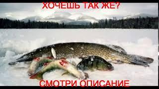 омская рыбалка форум