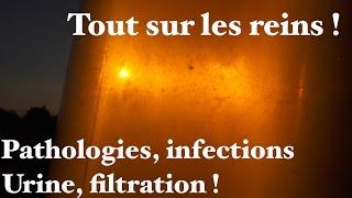 Tout sur les reins, urine, pathologies, symptômes et filtration - www.regenere.org