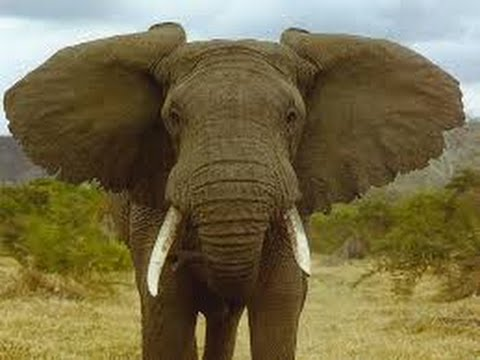 Elephant As A Totem Your Personal Power Animals Personality