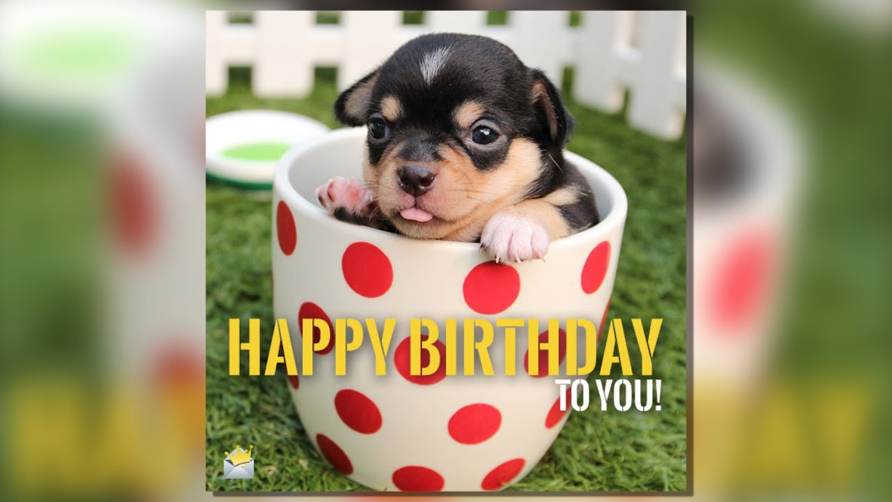 Happy Birthday Two Words From Cute Animals Youtube