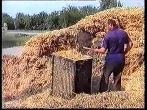 Мицелий грибов шиитаке, вешенки. От 80. 00 руб / кг. Мицелий грибов шиитаке, вешенки. Мицелий грибов шиитаке, пакеты по 2,5 кг, собственное производство в брянской области, склад в москве, южное бутово(щербинка). Возможно производство мицелия на заказ других видов грибов. + 79165334455.