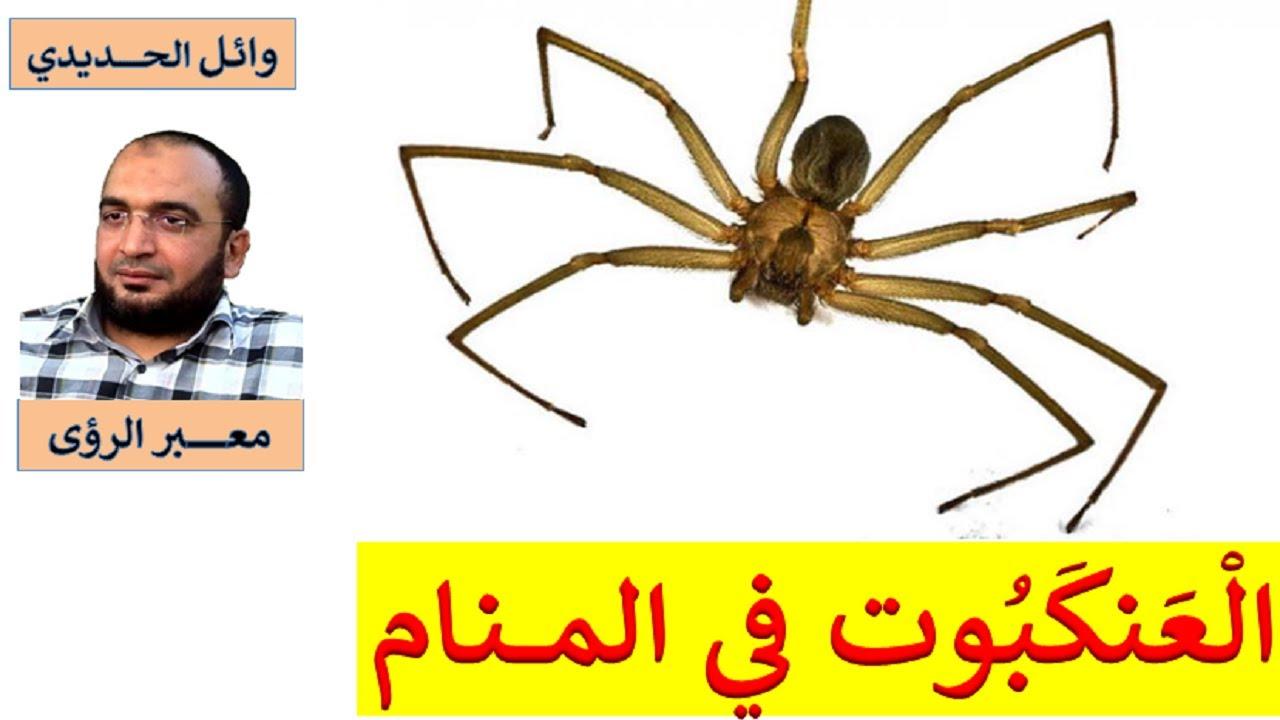 تفسير رؤية العنكبوت في 0