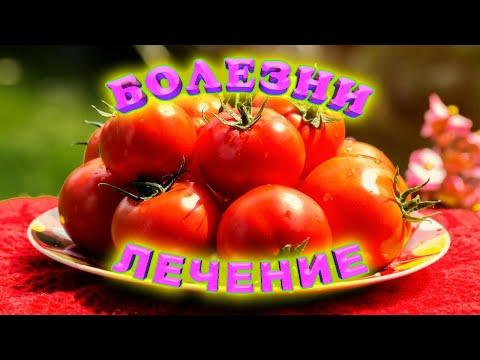 Болезни помидоров и их лечение! Семь основных болезней томатов!