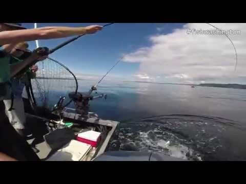Trolling For Puget Sound Chinook Salmon