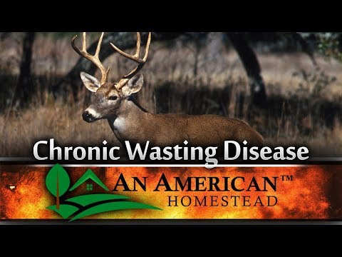 What's Causing CWD (Chronic Wasting Disease) In Deer?