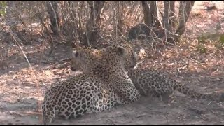 Pt 1 Safari Live's Sunrise Safari Drive at 6:00 AM on Sept 16, 2017 ( Tingana & Kuchava ) thumbnail