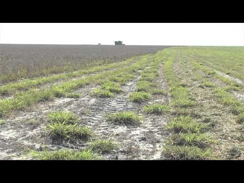 Pasture cropping - experiences of innovative growers
