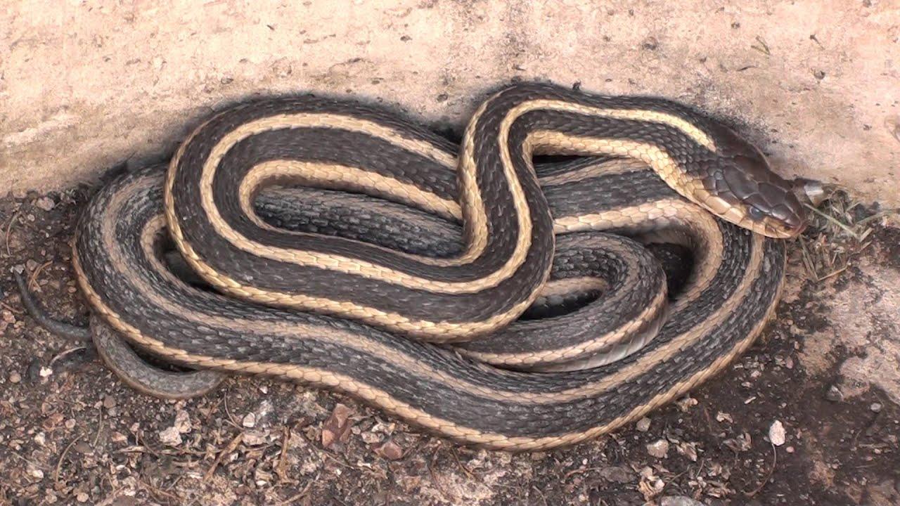 how to make a garter snake habitat