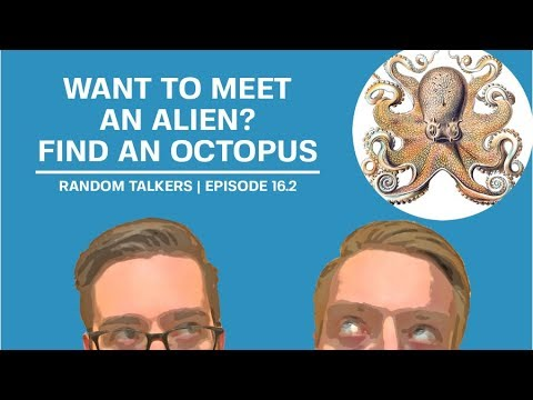 """We Review """"Other Minds"""" By Peter Godfrey-Smith, The Ultimate Guide To The Octopus"""
