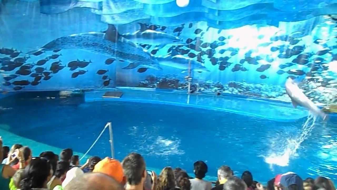 Barcelona Zoo Dolphins 2012 Avi Youtube