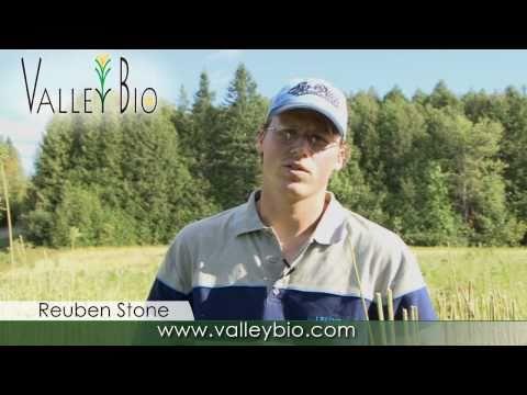Valley Bio Ontario's Industrial Hemp Supplier