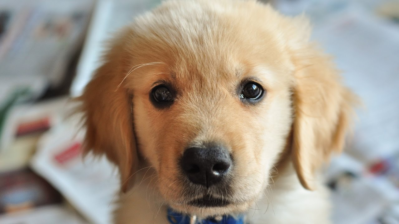 papilloma a kutya mancsán