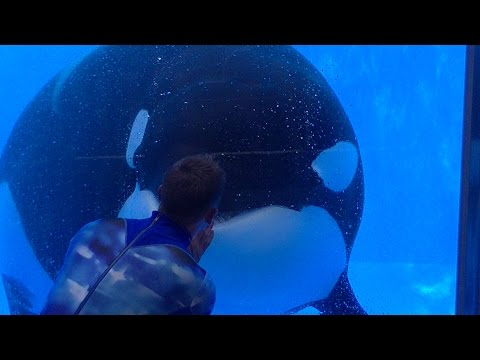One Ocean Featuring Tilikum & Malia - Aug 13 2016 - SeaWorld Orlando