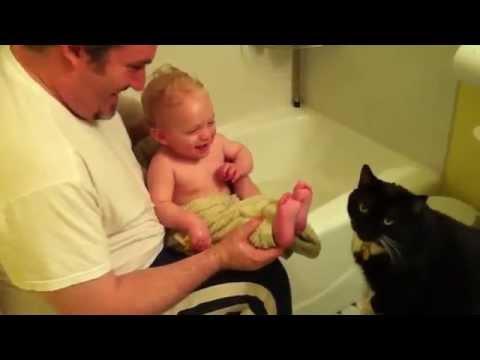 Смешные коты и кошки видео -