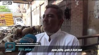 بالفيديو| أسعار الخراف بالمدبح نار.. والإقبال معدوم