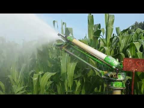 """Navodnjavanje kukuruza sa Sime """"River"""" topom - Best & co vrbas"""