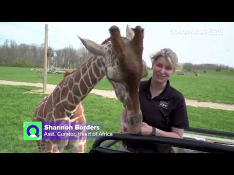 Why do giraffes have spots? — Columbus Zoo Qs