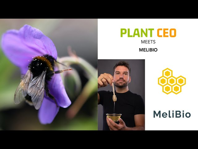PLANT CEO #15 -  Bee-less honey