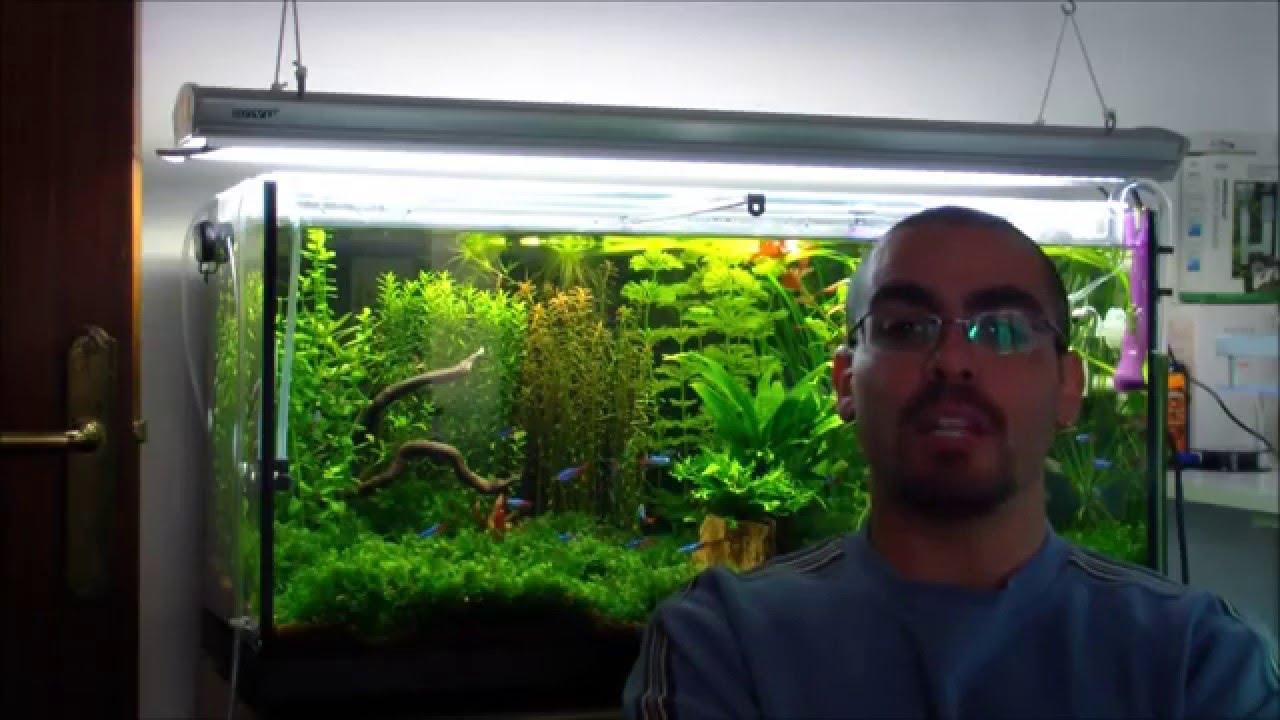 Plantas para peces de agua fria youtube for Peces para peceras pequenas agua fria