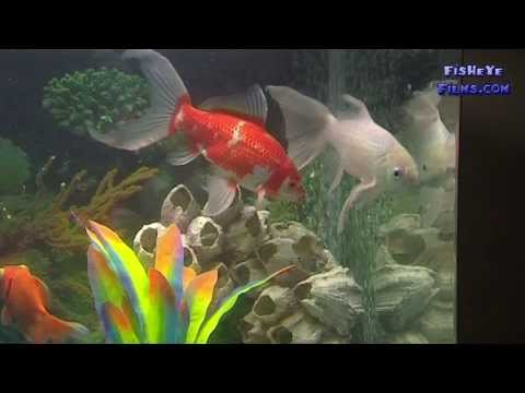 Perfect Water Quality In Your First Aquarium