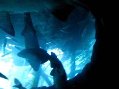 Dubai Aquarium - Dubai Mall - UAE