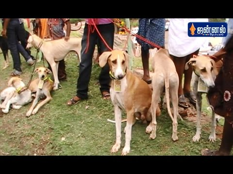 Amazing Dogs Show in INDIA | 'Saaral Thiruvizhaa' in Courtallam