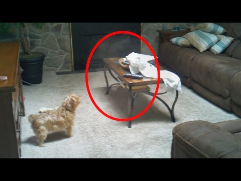 5 Creepy Times Pets Were Seeing Things Their Owners Couldn't!