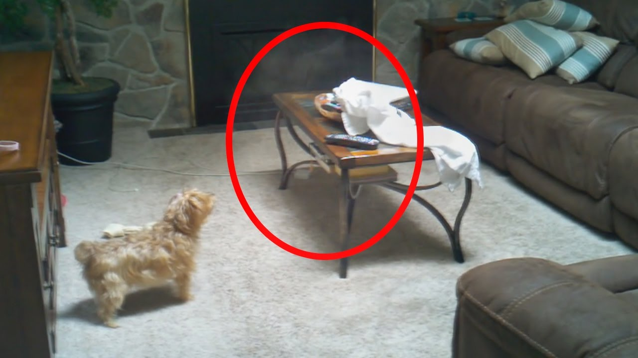 5 Creepy Times Pets Were Seeing Things Their Owners Couldn T