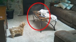5 Creepy Times Pets Were Seeing Things Their Owners Couldn't! thumbnail