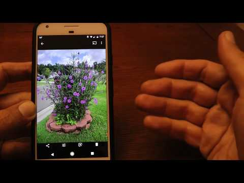 Google Lens example on Pixel phone identifying flowers