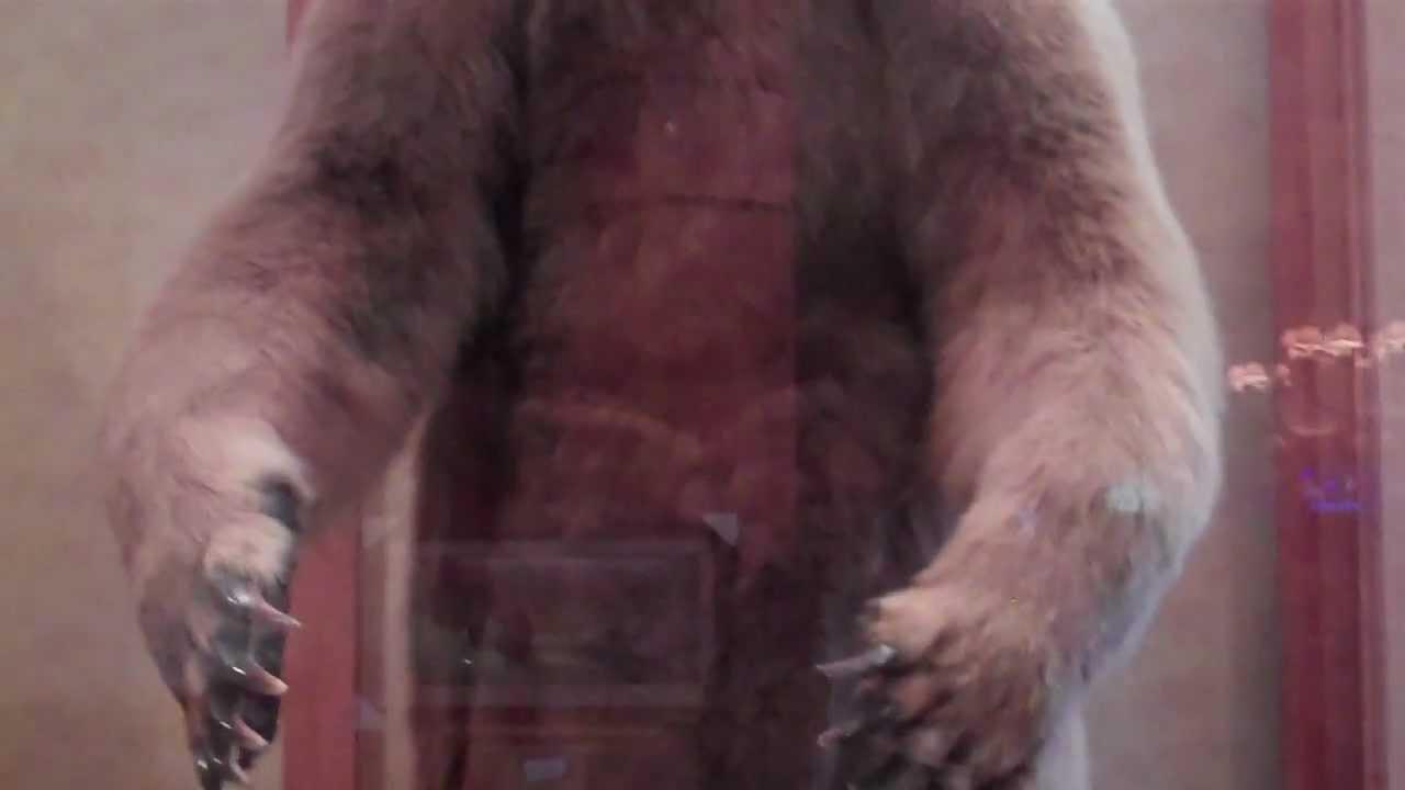 Anchorage Alaska Hilton Lobby Alaskan Brown Bear and Polar