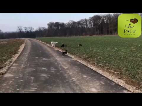 PACo Pet Care - Dog Walking - 2017 Week 4
