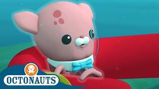 Octonauts - Inkling's Cousin   Cartoons for Kids   Underwater Sea Education