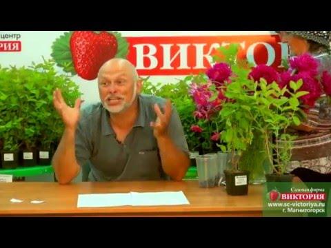 15 лучших сортов Огурцов